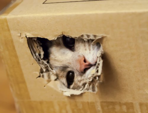 Why Cats and Boxes are a Natural Match