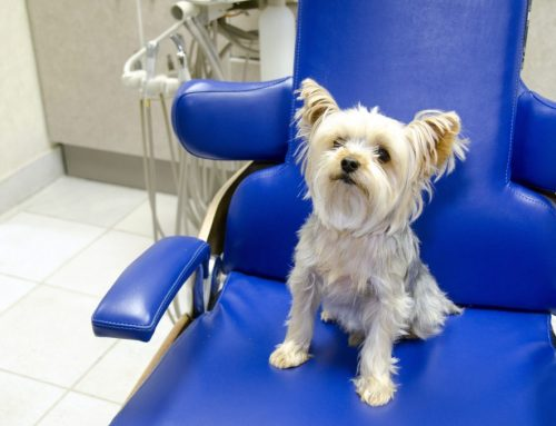 Open Wide: The Pet Dental Exam Decoded