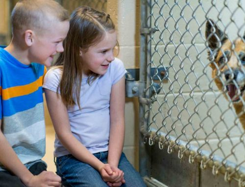 Gain A Friend For Life Through Responsible Pet Adoption