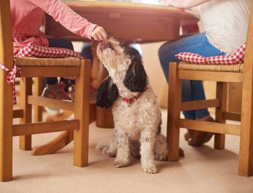 Holiday Foods for Pets: Hazards to Avoid