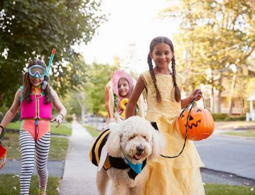 Halloween Candy and Pets: Sweet Treat No No's