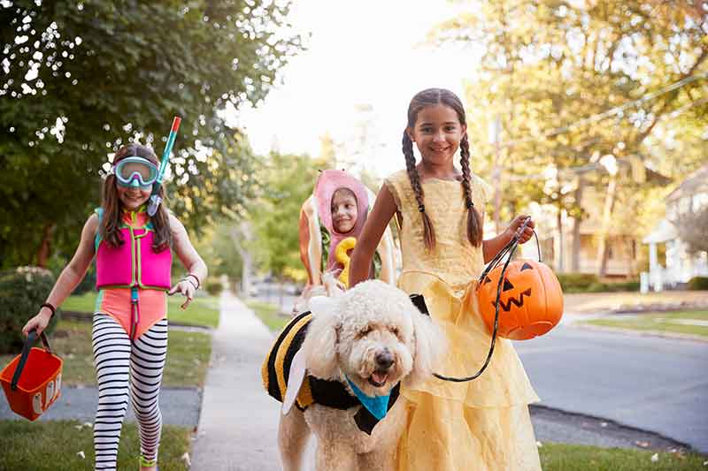 Halloween candy and pets can lead to a pet emergency.