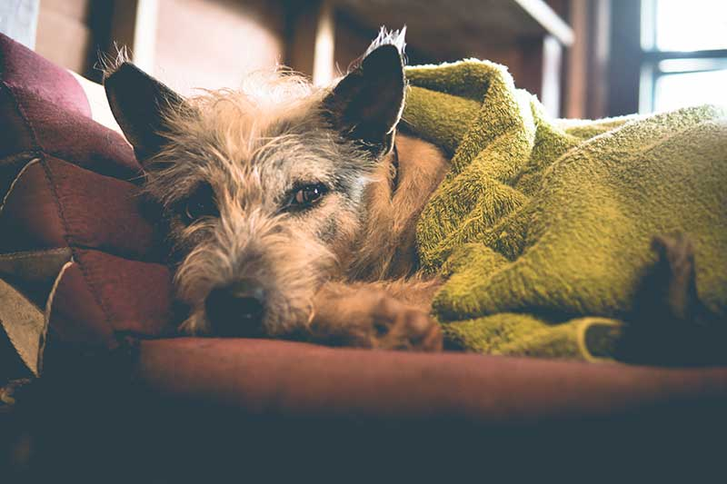 Pet pain can be easily managed with the help of veterinary care