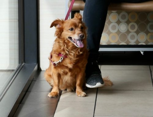 Year-Round Pet Heartworm Prevention: Is it Really Necessary?