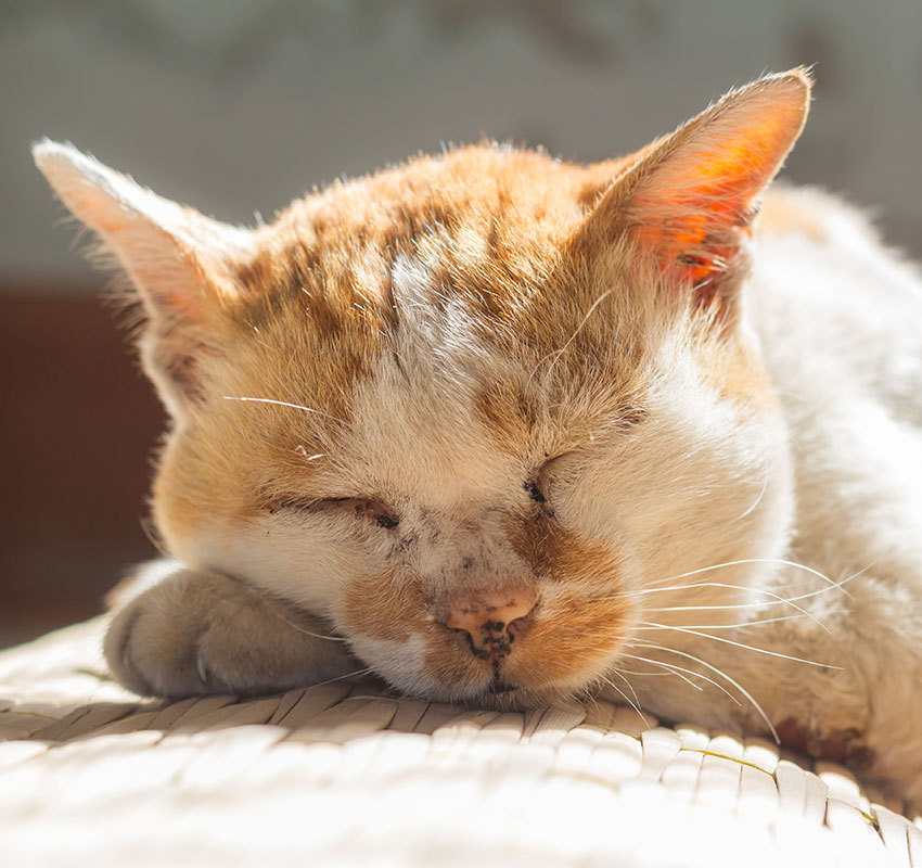 old cat sleeping on floor - Image