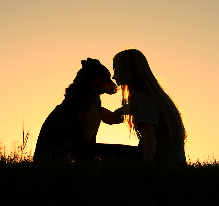 a special and serene moment as a girl is lovingly hugging her German Shepherd Dog, silhouetted against the sunsetting sky - Image