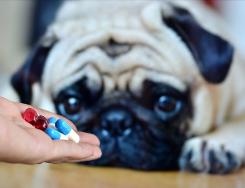The High Cost of Unlicensed Online Pet Pharmacies