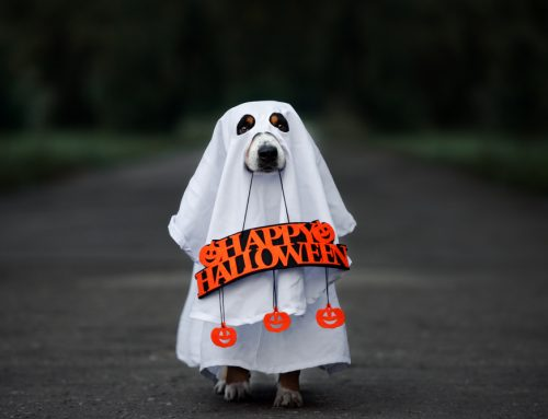 Hazards to Avoid to Ensure a Spooktacular Halloween for Pets