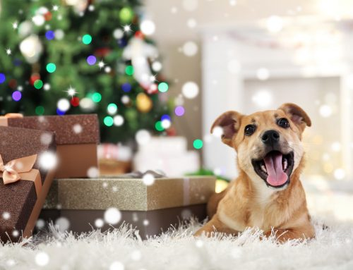 Top 10 Most Useful Holiday Pet Gifts