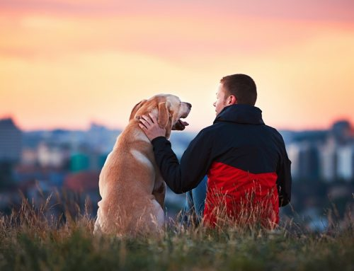 The Importance of Regular Dental Care for Your Pet's Health