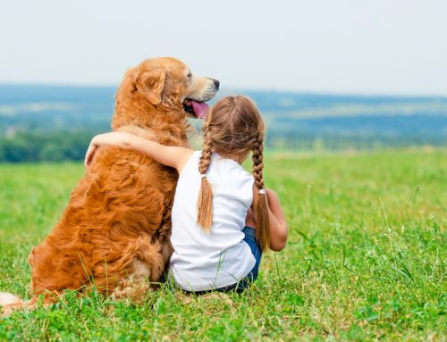 7 Tips to Help Kids and Pets Live Happily Together