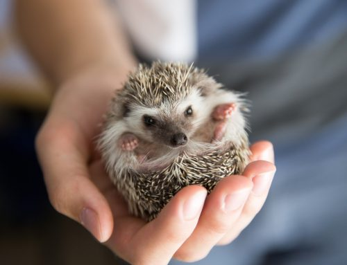 All Creatures Wild and Wonderful: How to Choose and Exotic Pet