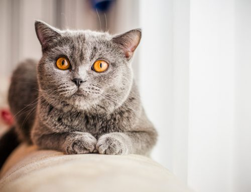 Veterinary Care Can Help Ensure a Lifetime of Wellness for Your Cat