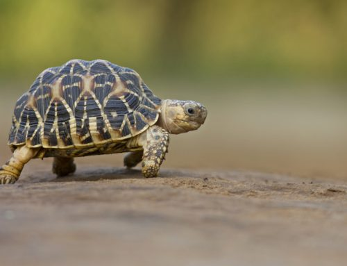 Considering an Exotic Pet? 7 Secrets for Successful Coexistence