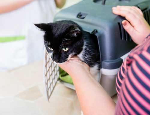 5 Ways to Prepare Your Pet for the Best Veterinary Visit Ever